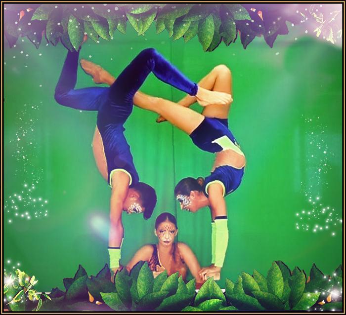 Animals - Acrobatico